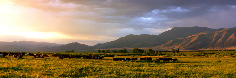 Landscape of the ranch