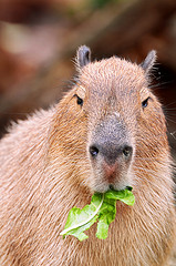 Eating some leaves