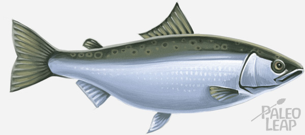 Paleo diet faq paleo leap for Why do fish have mercury