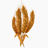 Image result for wheat images