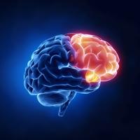 brain-paleo