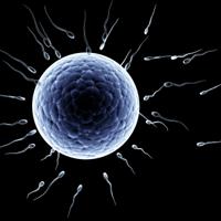 paleo-fertility