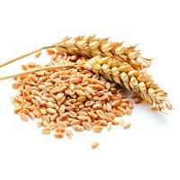 whole-grain wheat