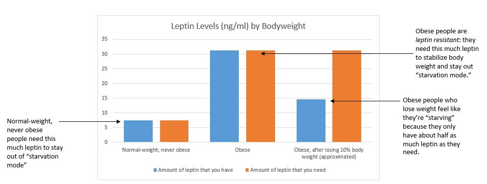 Leptin chart
