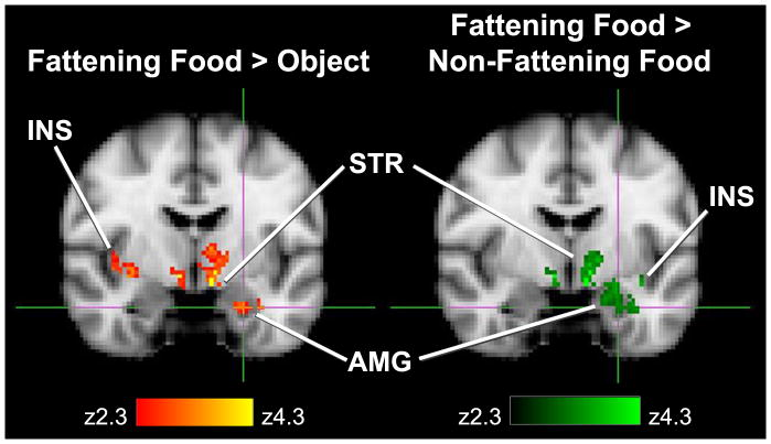 Fattening and nonfattening foods