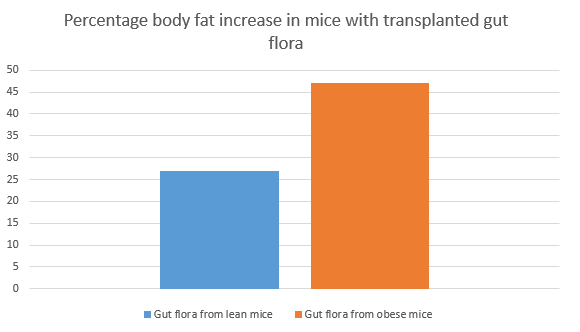 Obesity and gut flora in mice